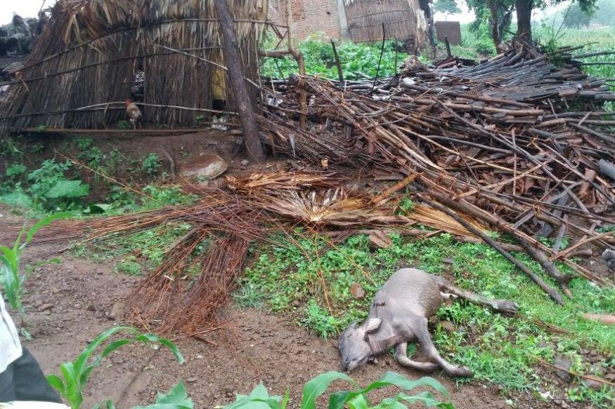17 ઓગષ્ટ - છોટાઉદેપુર જીલ્લામાં આવેલા કાંટ તાલુકાના બુંજર ગામમાં વરસાદી આફત આવી પડી હતી. આ ગામમાં ભારે વરસાદના પગલે બે મકાન ધરાશાયી થયા, જેમાં કાટમાળ નીચે દટાઈ જવાથી બે લોકોના મોત નિપજ્યા છે, જ્યારે એક પશુ(બળદ)નું પણ મોત નિપજ્યું હતું.