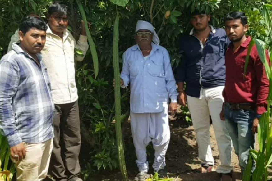 ગુજરાતમાં હાલ વરસાદની અછતના ડાકલા વાગી રહ્યા છે. ત્યારે ખેડૂતો મુંઝવણમાં છે. એવામાં ક્યાંક ક્યાંક કુદરતનો કરિશ્મા પણ જોવા મળી રહ્યો છે. થોડા સમય પહેલા સૌથી મોટી ડુંગળી ચર્ચામાં હતી, પરંતુ હાલ દ્વારકાના જામખંભાળિયા તાલુકાનું વીંઝલપર ગામ હાલ ચર્ચામાં છે. આ ચર્ચાનું કારણ છે અહીં એક ખેડૂતની વાડીમાં 64 ઇંચ લાંબા ઘીસોડા ઉગ્યા છે. કિંજલ કારસરીયા, દેવભૂમિ દ્વારકા