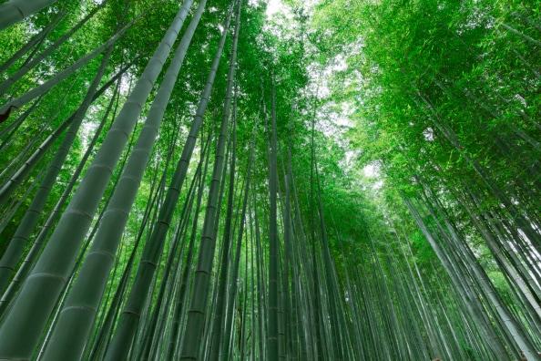 વાંસનું વૃક્ષ - વાંસનું વૃક્ષ સૌથી ઝડપી વૃદ્ધિ કરનાર વૃક્ષ છે. તેના વધવાની ઝડપ ખૂબ ઝડપી છે. વાંસનું વૃક્ષ હવા ફ્રેશ કરવાના કામમાં પણ આવે છે. કહેવાય છે કે વાંસનું વૃક્ષ અન્ય વૃક્ષો કરતા 30 ટકા વધુ ઓક્સિજન છોડે છે.
