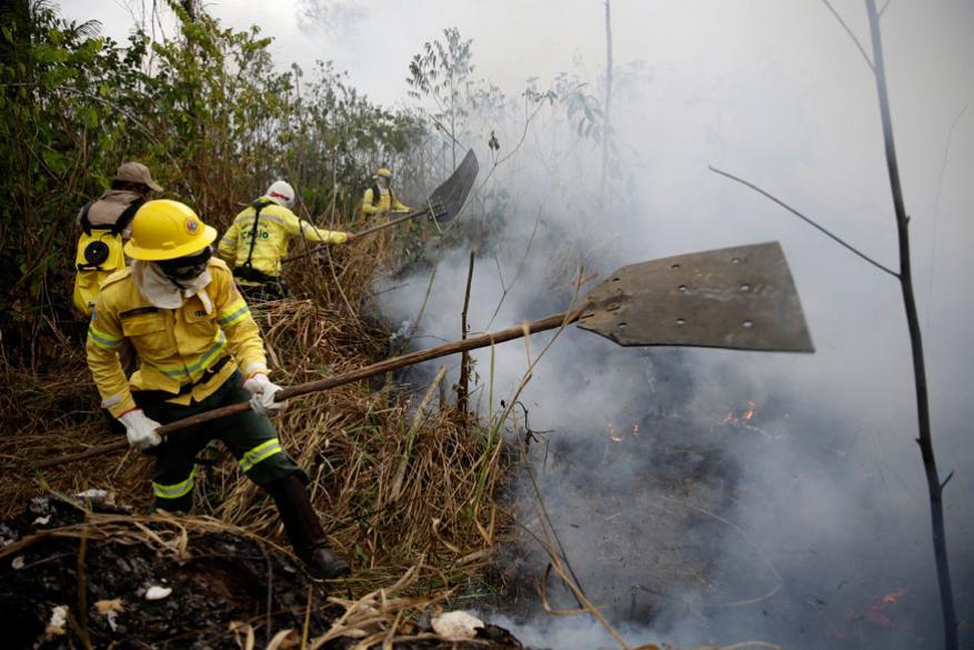ફાયર ફાયટરો જગંલમાં આગ બુઝાવવા જહેમત કરી રહ્યા છે.