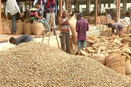 સરકાર 1લી નવેમ્બરથી મગફળીની ખરીદી કરશે, ખેતીમાં 33%થી વધુ નુકસાનીનું વળતર મળશે