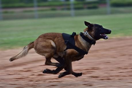 અમદાવાદ : ઘરે પહોંચેલી પોલીસ પાછળ આરોપીએ કૂતરો છૂટો મૂકી દીધો