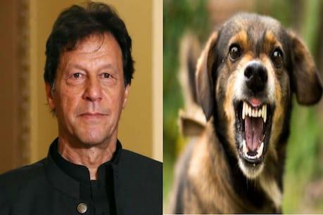 પાકિસ્તાનમાં કૂતરા અને મચ્છરોના 'આતંક' એટલો વધ્યો કે તુર્કીથી મદદ માંગી