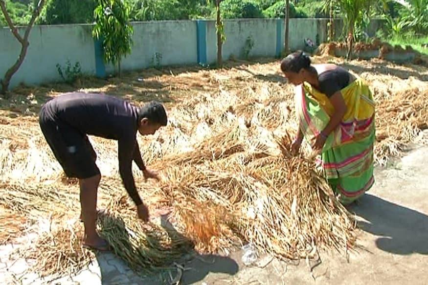 તમને જનાવી દઈએ કે, નવસારી જિલ્લાના દરિયા કિનારે આવેલ આ ગામમાં માત્ર વરસાદ આધારિત ખેતી થાય છે, ચોમાસામાં કરવામાં આવેલી વાવણી બાદ પાક તૈયાર થયો અને કમોસમી વરસાદને કારણે આખો પાક બગડી ગયો છે. ડાંગર તો બગડી ગઈ તો ઠીક પણ ડાંગરનો ઘાસ ચારો પણ પાણીમાં ડૂબી જતાં બગડી ગયો જેને લઈને પશુ પાલન કરતા આ ખેડૂતોને બે બાજુ નુકશાન વેઠવાનો વારો આવ્યો છે. આ ખેડૂતોને બીજો પાક લેવો હોય તો હવે આગામી ચોમાસા સુધી એટલે કે 8 મહિના રાહ જોવી પડશે. આ નુકશાન ઓછું હોય તેમ વાવાઝોડાની દહેશત વચ્ચે દરિયાના પાણી ગામમાં આવે તો વધુ નુકશાન વેઠવાનો વારો આવે તેમ છે.