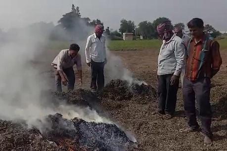 રાજકોટ : કમોસમી વરસાદને કારણે 15 વીઘા જમીનનો મગફળીનો પાક નિષ્ફળ, ખેડૂતોએ સળગાવ્યો