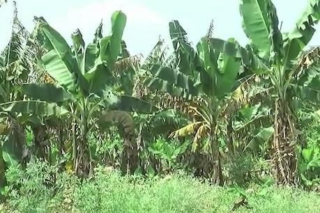 નર્મદા જિલ્લાનાં ખેડૂતોમાં ચિંતા : હેલ્પલાઇન નંબર જ નથી લાગતા, વળતર ક્યારે મળશે