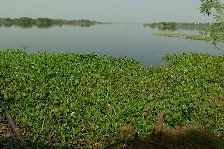 'સાહેબ, મચ્છર સે ડર લગતા હૈ,' રાજકોટમાં બેડી યાર્ડ અને ગામમાં મચ્છરોનો હુમલો!