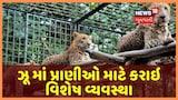 Video: ગરમીના પ્રકોપના પગલે અમદાવાદના ઝૂ માં પ્રાણીઓ માટે કરાઇ વિશેષ વ્યવસ્થા