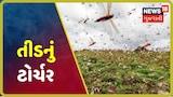 તીડનું ટોર્ચર : હળવદમાં તીડ ત્રાટકતાં ખેડૂતોની ચિંતા વધી, નગારા વગાડી ભગાડવાનો પ્રયાસ