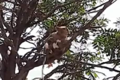 મેરઠ મેડિકલ કોલેજમાં વાંદરાઓએ Lab Technician પાસેથી છીનવ્યા કોરોના ટેસ્ટ સેમ્પલ, વીડિયો વાયરલ