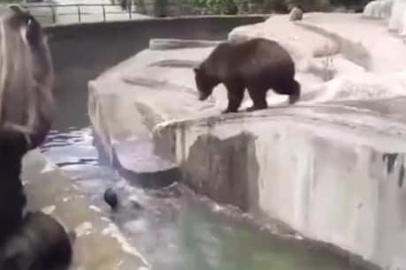 દારૂડિયાએ પાંજરામાં કૂદી રીંછને પાણીમાં ડૂબાડવાનો કરો પ્રયાસ, જુઓ VIDEO