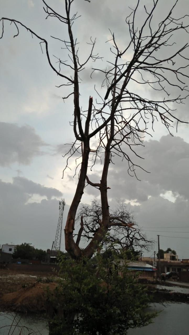 મહત્વનું છે કે હવામાન વિભાગ દ્વારા આગાહી પણ કરવામાં આવી છે.અમદાવાદ શહેર સહિત રાજ્યના કેટલાક ભાગોમાં સામાન્યથી મધ્યમ વરસાદ થશે. 29 30 તારીખે ભારે વરસાદ ની અગાહી કરી છે. વલસાડ, નવસારી ,ભાવનગર, દિવ અને દાદરાનગર હવેલી ભારે વરસાદની આગાહી છે.તેમજ આણદ,ખેડા,દાહોદ,પંચમહાલ,રાજકોટ,બોટાદ,દ્વારકા,પોરબંદર,જૂનાગઢ,અમરેલી,ભાવનગર,ગીર સોમનાથ,કચ્છ વરસાદ ની અગાહી આપવામાં આવી છે.30 જૂન ના અમદાવાદ,મહીસાગરમાં પણ વરસાદની આગાહી કરવામાં આવી છે.