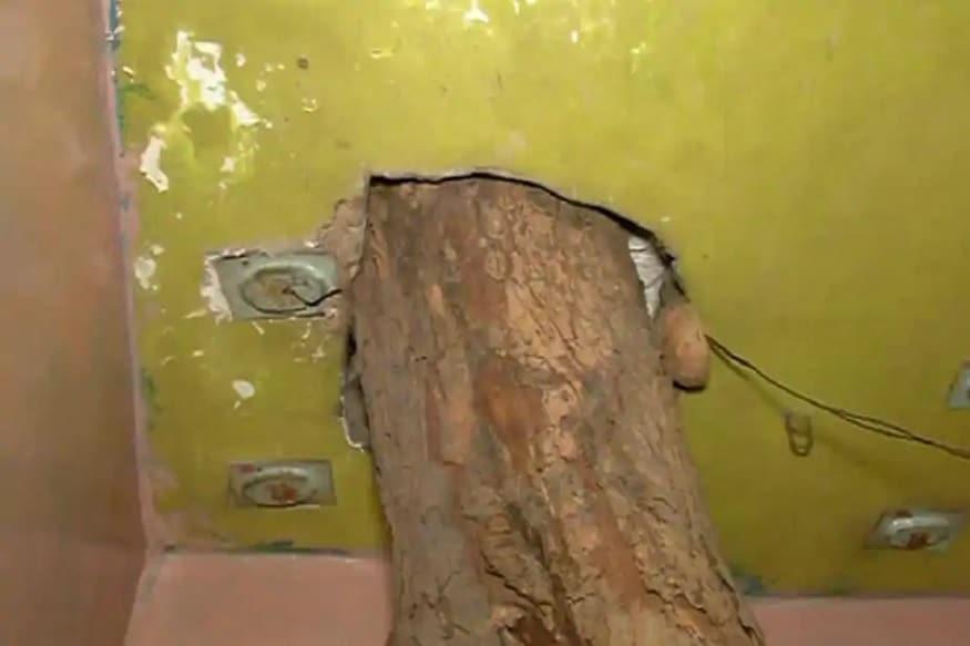 તેમના પુત્રો પ્રમામે મોતીલાલ કેશરવાની આ ઝાડના છાંયડામાં મોટા થયા હતા. એટલા માટે જ્યારે અહીં મકાન બનાવવાનો વારો આવ્યો તો તેમણે આ ઝાડને પોતાની સાથે રાખવાની ઈચ્છા વ્યક્ત કરીહતી.