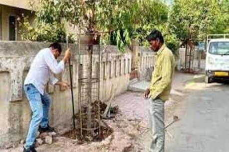 શું તમારે તમારા ઘર આંગણે વૃક્ષારોપણ કરવું  છે? તો આ રીતે અમદાવાદ મહાનગર પાલિકાનો કરો સંપર્ક