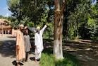 ચમત્કાર! આ ઐતિહાસિક મંદિરમાં આવેલા આંબાના ઝાડમાંથી ધૂમાડો નીકળવાનો દાવો