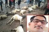 વીજળી પડવાની બે ઘટનાઃ હળવદના મિયાણી ગામે 12 ઘેટાંના મોત, શિરોહીમાં બાઈક પર જતા વકીલનું મોત