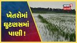Rajkot: ઉપલેટાના ગઢડા પંથકમાં હજુ પણ ખેતરોમાં વરસાદી પાણી, અનેક પાકોને ભારે નુકસાન