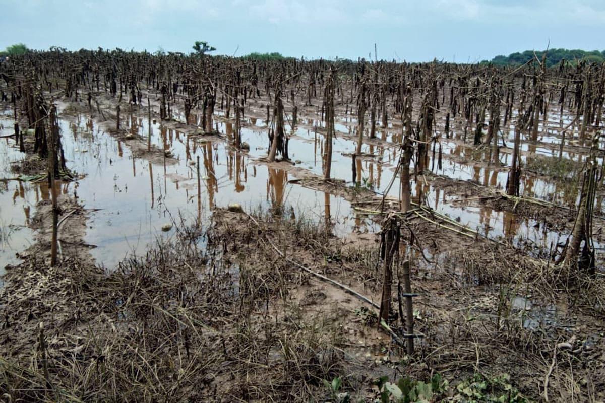 નદીના કિનારાના વિસ્તોરમાં આવેલા ખેતરોમાં 20 ફૂટ સુધી પાણી ભરાયા હતા. નર્મદા જિલ્લાના ધનપોર, ધમણાચા, રૂંઢ, હજરપુરા, ભુછાડ, શહેરાવ, તારસાલ સહિતના 24 જેટલા ગામોની સીમોમાં પાણી ભરાતા જળબંબાકારની પરિસ્થિતિ ઊભી થઇ હતી. જિલ્લામાં નર્મદાના પાણીથી આશરે 4,000 હેક્ટર જમીનમાં કેળા, શેરડી, કપાસ, પપૈયા, શાકભાજી સહિતના પાકો નષ્ટ થઈ ગયા છે.