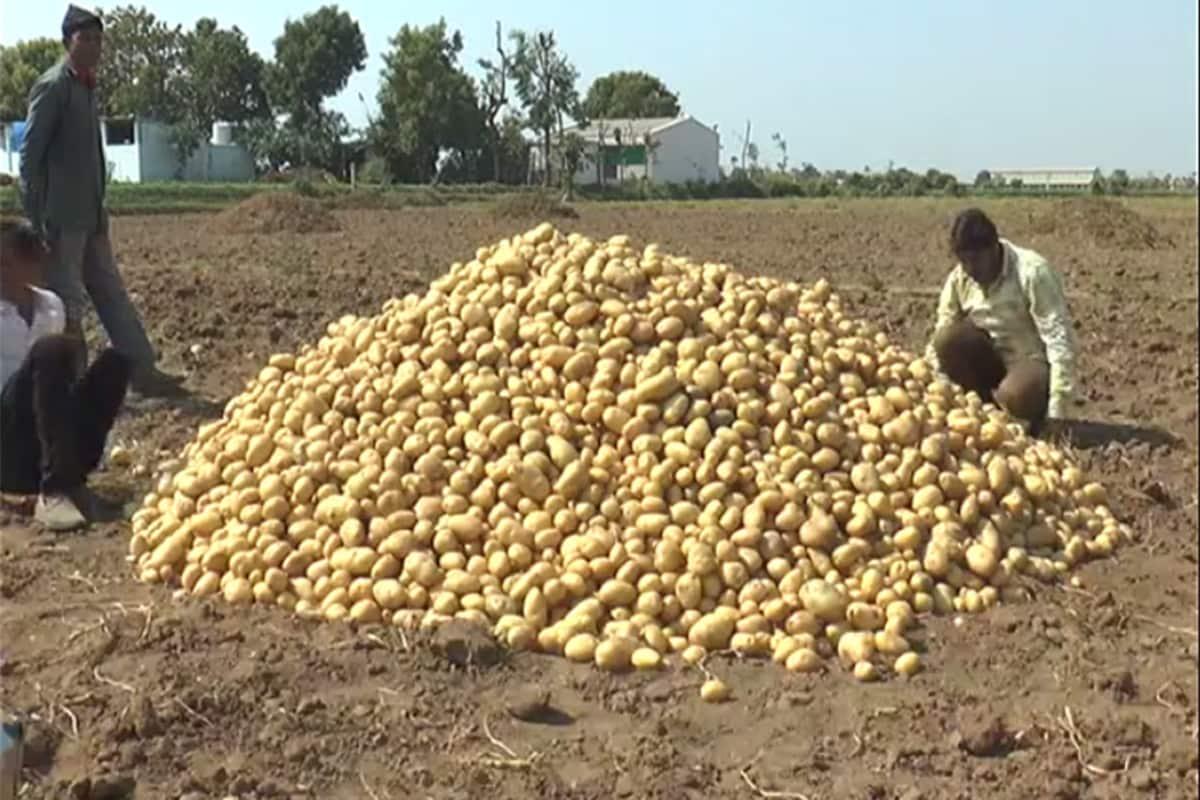 અત્યાર સુધીમાં ઐતિહાસિક કહી શકાય તેવા 800 રૂપિયા પ્રતિ મણ બટાકાના ભાવ થતાં ખેડૂતોને વેપારીઓમાં આનંદની લાગણી છવાઈ છે. વેપારીઓ અને ખેડૂતોનું કહેવું છે કે પાંચ વર્ષમાં જે નુકસાન તેમણે ભોગવ્યું છે તે આ વર્ષે તેજીના કારણે સરભર થશે.