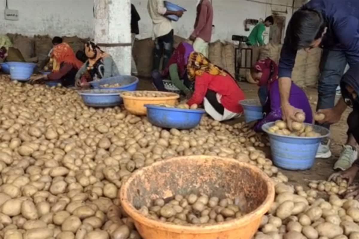 આનંદ જયસ્વાલ, બનાસકાંઠા: બનાસકાંઠામાં બટાકા (Popato)ના ભાવ ઐતિહાસિક સપાટીએ પહોંચતા ખેડૂતો અને વેપારીઓમાં આનંદનો માહોલ છવાયો છે. આજ દિવસ સુધીમાં બટાકાનો ભાવ ક્યારે 800 રૂપિયા નથી થયો,પરંતુ આ વર્ષે 800 રૂપિયા પ્રતિ મણનો ભાવ મળતા પાંચ વર્ષની મંદીનો માર સરભર થયો છે. બનાસકાંઠા (Banaskantha)માં કોરોના મહામારીના સમયમાં બટાટાના વેપારીઓ અને ખેડૂતોને ઘી કેળા જેવી સ્થિતિ બની છે.