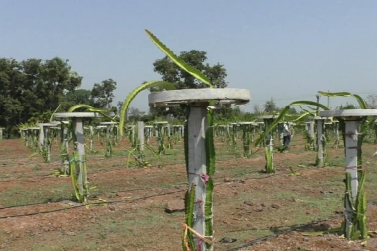 ખેતીનો વ્યવસાય વાતાવરણ આધારિત વ્યવસાય છે,ત્યારે પાકને માફક આવતું વાતાવરણ મળે તો જ તેનું મબલખ ઉત્પાદન મેળવી શકાય છે. તે દિવસો હવે ભૂતકાળ બન્યા છે.