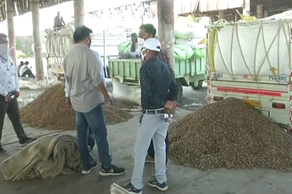 અંકિત પોપટ, રાજકોટ: રાજકોટ સહિત સમગ્ર રાજ્યભરમાં ટેકાના ભાવે (MSP) મગફળી (Groundnut)ની ખરીદીની શરૂઆત કરવામાં આવી છે. પરંતુ ખેડૂતોનો ઝૂકાવ સરકારી ખરીદીની જગ્યાએ ખુલ્લા બજાર તરફ વધુ જોવા મળી રહ્યો છે. આજે રાજકોટના ચાર સેન્ટર પર 80 ખેડૂતો (Farmers)ને પોતાની મગફળી વેચવા માટે બોલાવવામાં આવ્યા હતા પરંતુ ત્રણ તાલુકામાંથી ફક્ત નવ જ ખેડૂતો ટેકાના ભાવે મગફળી વેચવા માટે આવ્યા હતા. ઉલ્લેખનીય છે કે દર વર્ષે ટેકાના ભાવે મગફળીની ખરીદી શરૂ થતાની સાથે ખરીદીના સેન્ટરો પર જાણે ખેડૂતોની કીડિયારું ઊભરાયું હોય છે. પરંતુ ચાલુ વર્ષે અહીંયા ખેડૂતોએ મગફળીની ખરીદી મામલે નિરસતા દાખવી છે.