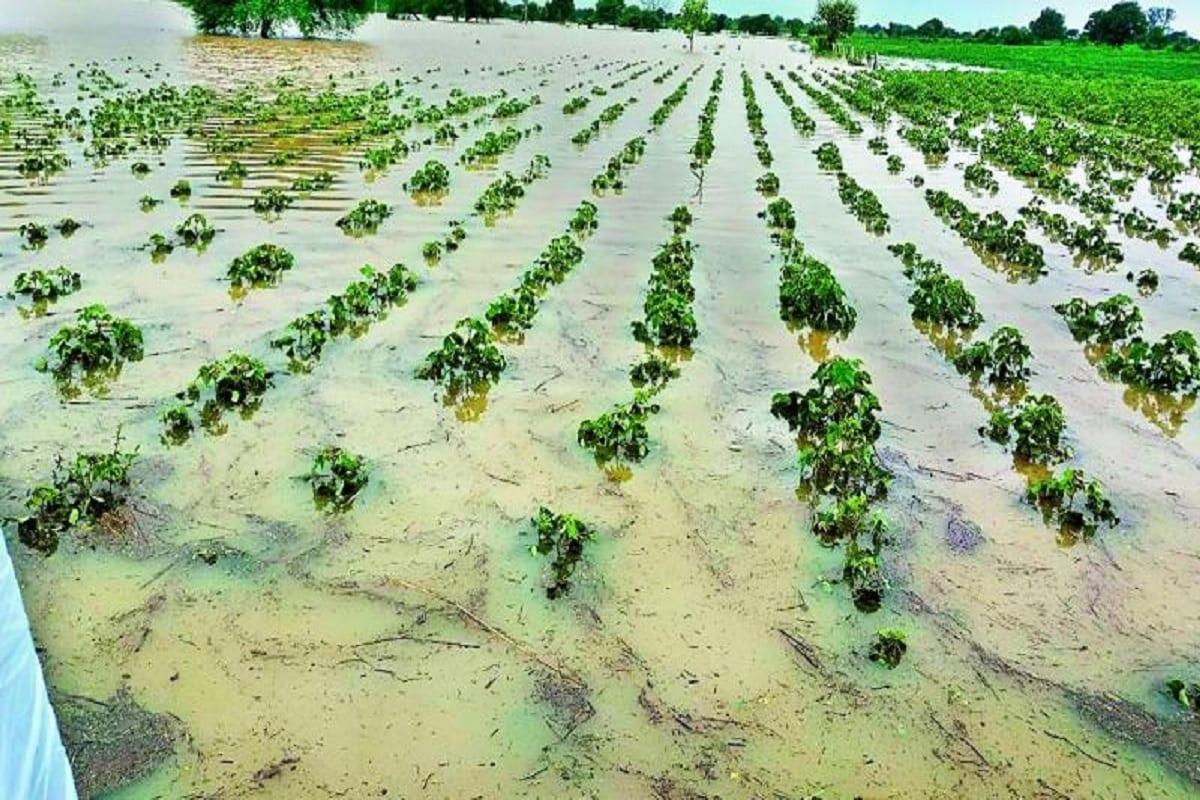 દક્ષિણ ગુજરાત અને સૌરાષ્ટ્રના અનેક જિલ્લાઓમાં સતત ત્રીજા દિવસે વરસાદી માહોલ યથાવત્ રહ્યો હતો. રાજ્યમાં (Gujarat) છેલ્લા 24 કલાકમાં 32 તાલુકામાં વરસાદ (Monsoon) નોંધાયો છે. જેમા સૌથી વધુ પોરબંદનાં (Porbandar) રાણાવાવમાં 2.76 ઇંચ વરસાદ ખાબક્યો છે. જ્યારે કચ્છનાં ભૂજમાં 2.40 ઇંચ, ગીર સોમનાથનાં ગીર ગઢ઼ામાં 2.17 ઇંચ વરસાદ નોંધાયો છે. આ સાથે જૂનાગઢનાં માળિયામાં 36 એમએમ, દ્વારકાનાં કલ્યાણપૂરમાં 30 એમએમ, નર્મદાનાં સાગબારામાં 27 એમએમ, કચ્છનાં અંજાર, અમરેલીનાં લાઢીમાં 25 એમએમ વરસાદ વરસ્યો છે. (પ્રતિકાત્મક તસવીર)