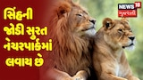 Surat : Raipur થી સિંહની જોડી સુરત નેચરપાર્કમાં લવાઇ