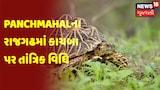Panchmahalના રાજગઢમાં કાચબા પર તાંત્રિક વિધિ |અંધશ્રદ્ધા સામે સંસ્થાઓએ ઝુંબેશ આપી