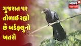 ગુજરાત પર તોળાઇ રહ્યો છે બર્ડફ્લુનો ખતરો