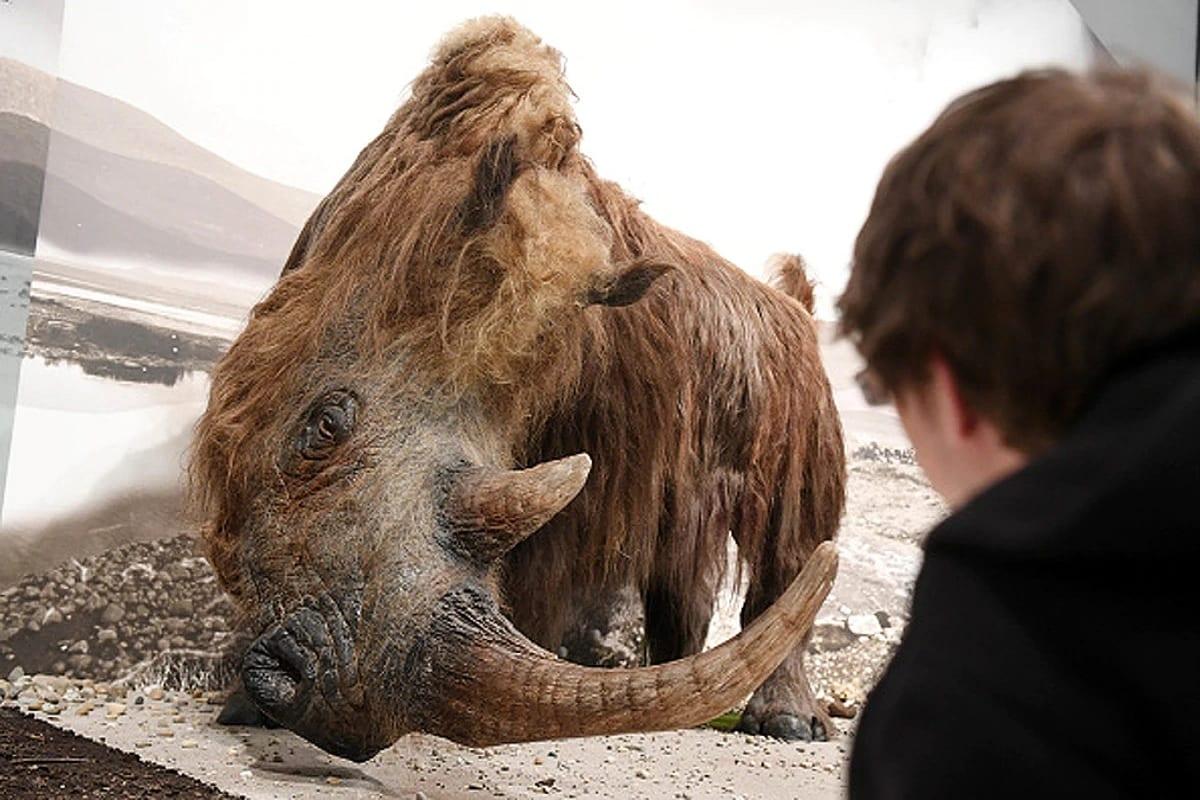 26 જાન્યુઆરીના દિવસે સાઇબેરિયામાં વૈજ્ઞાનિકોને એક લાંબા વાળ વાળા ગેડાના (Woolly Rhino) 40 હજાર વર્ષ જૂના અવશેષ મળી આવ્યા છે. આ ગેડો 40 હજાર વર્ષથી સાઇબેરિયાના પર્માફ્રોસ્ટમાં દબાયેલો હતો. જ્યારે બરફ પીગળ્યો તો તે બહાર આવ્યો હતો. (ફોટો -ગેટી)