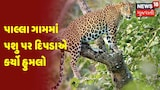 Panchmahal : પાલ્લા ગામમાં પશુ પર દિપડાએ કર્યો હુમલો