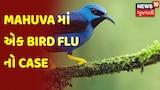 Mahuva માં એક Bird Flu નો Case
