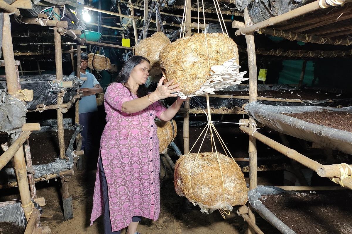 જેના કારણે તેઓ આખો દિવસ મશરૂમની ખેતીમાં કાઢે છે. તેમના સસરાની આગેવાની હેઠળ તેઓ આ મશરૂમની ખેતી કરે છે અને તેઓ માર્કેટિંગ પણ જાતે જ કરી રહ્યા છે. તેમનું પેકિંગ પણ તેઓ જાતે જ વેચાણ કરે છે. મિત્તલ પટેલે નાના પાયે શરૂઆત કરેલા બિઝનેસ ધીમે ધીમે મોટા પાયે કરવાની પણ તેઓ ઈચ્છા વ્યક્ત કરી છે.