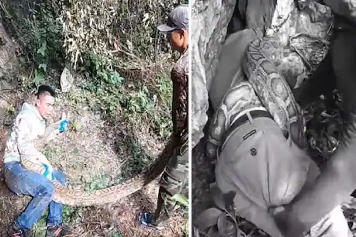 આ વિશાળ અજગરની પકડમાંથી મરતા-મરતા બચ્યો આ વ્યક્તિ, જુઓ ડરાવી દે તેવો Video