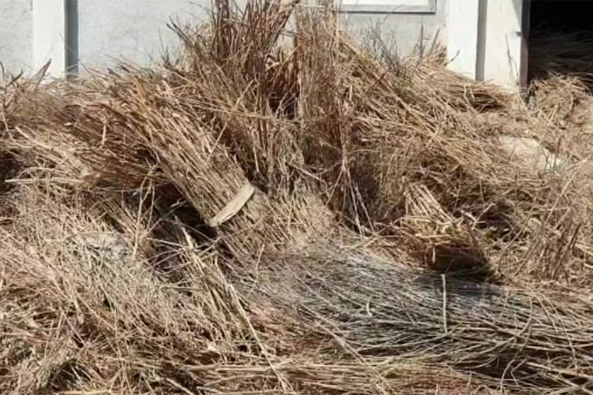 મૃતદેહની સંખ્યામાં વધારો થતાં સ્મશાનામાં લાકડાની અછત થઈ રહી છે. જેના કારણે લાકડા મોકલતા લોકો લીલા લાકડા પણ સ્મશાનોમાં મોકલી રહ્યાં છે. આ કારણે મૃતદેહોના અંતિમ સંસ્કાર માટે મુશ્કેલી નડી રહી છે. લાકડા લીલા હોવાથી અંતિમક્રિયા માટેનો સમય લંબાઈ રહ્યો છે.