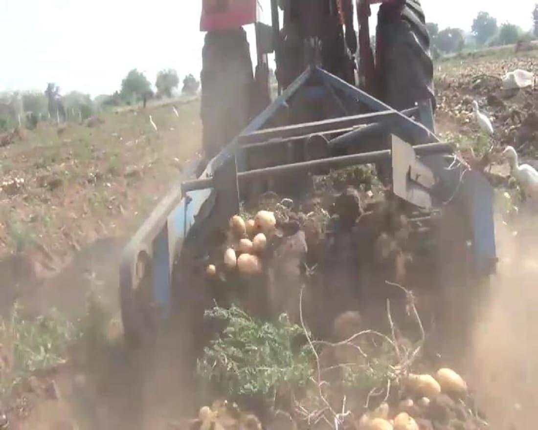 તેઓબટાકાની ખેતી માટે ગૌ મૂત્રવડની માટી છાશ ચણાના લોટનું જીવામૃત બનાવી બટાકાની ખેતીમાં ઉપયોગ કરે છે. જેથી સ્વાસ્થ્યલક્ષી બટાકાનું ઉત્પાદન કરી શકે છે. તેમજ ખાતર તરીકે જીવામૃતનો ઉપયોગ કરતા હોવાથી જમીનની ફળદ્રુપતા વધે છે અને વર્ષ 5થી 6 લાખ રૂપિયા બટાકાની ખેતીમાં કમાણી થાય છે.