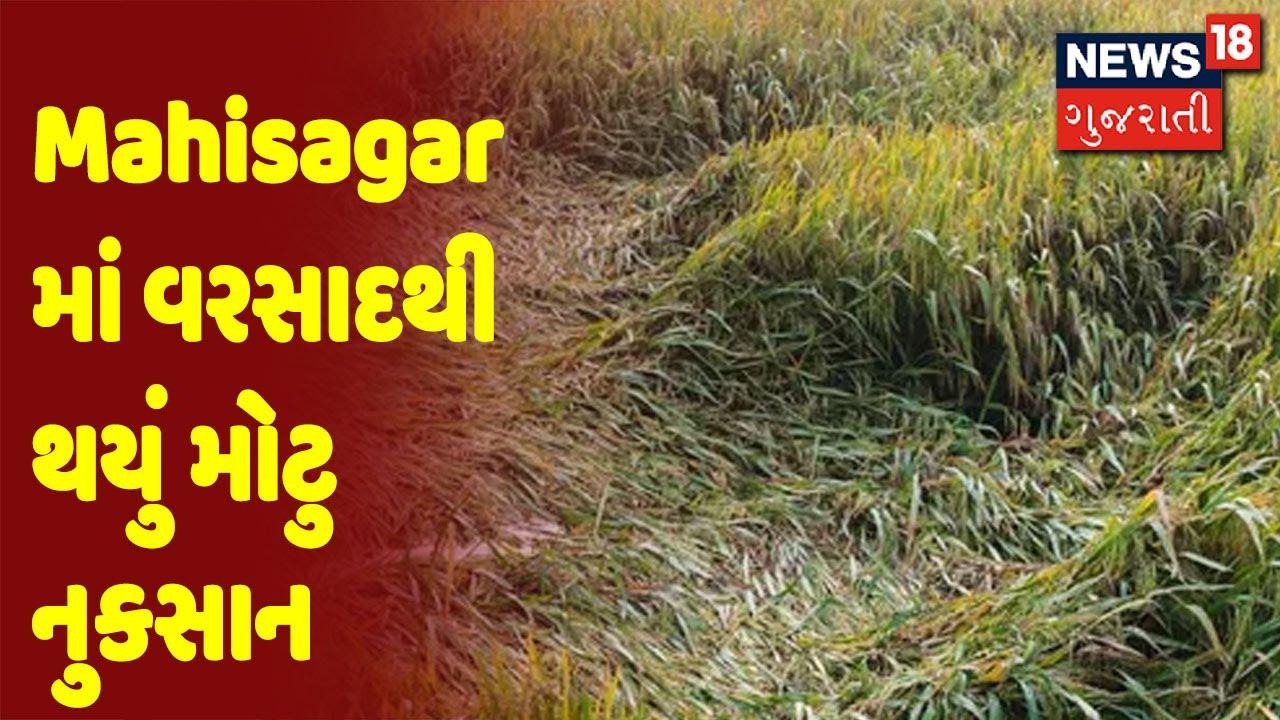 ખેડૂતોના ઉભા પાક તેમજ પશુઓ માટેના ઘસચારાને થયું નુકસાન, ખેડૂતોની સરકાર પાસે સહાયની માંગ
