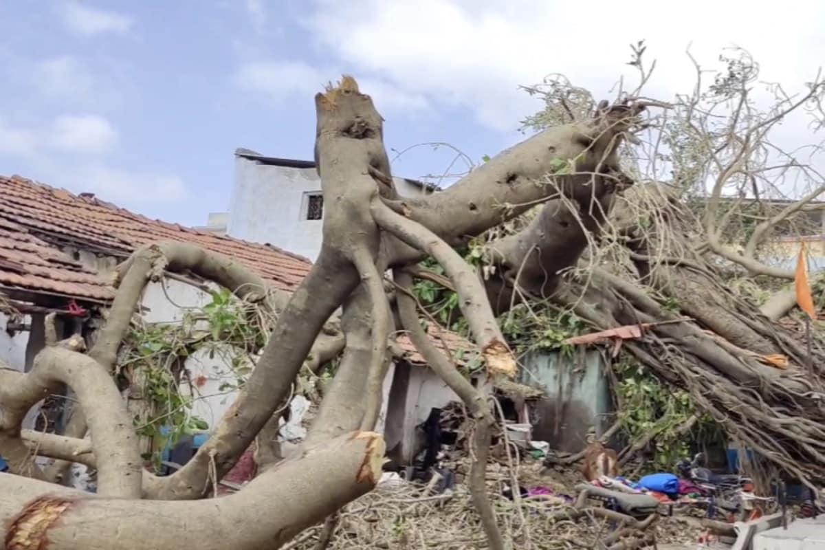 અને એક સમયે ઉના નજીકના દેલવાડા ગામથી અંજાર જતારસ્તોમાં ઘટાદાર વૃક્ષો જોઈને સૌ કોઈ આનંદિત થઈ જતા. પરંતુ આજે તુફાને મચાવેલી તબાહી ના કારણે હાલ અંજાર ગામથી 7 કિલોમીટર દૂર આવેલું અંજાર ગામ ચોખ્ખું દેખાય રહ્યું છે.