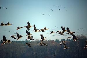 કઈ રીતે પક્ષીઓ દિશા શોધી શકે છે, પક્ષી Earth Magnetic Fieldનો ઉપયોગ કેવી રીતે કરે છે