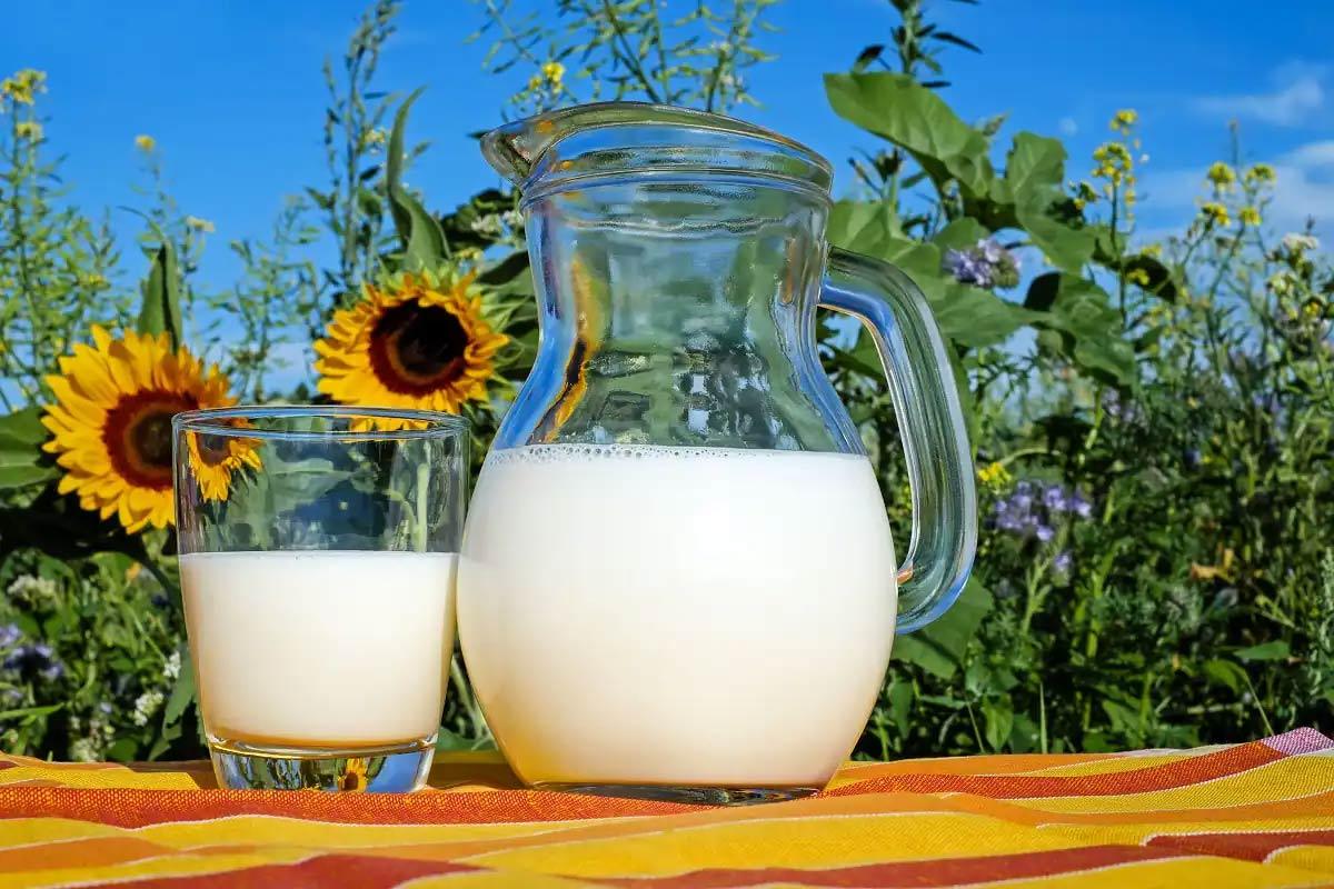 World Milk Day 2021: આજે ઉજવાઈ રહ્યો છે 'વિશ્વ દૂધ દિવસ', જાણો શું છે ઈતિહાસ અને આ વર્ષની થીમ