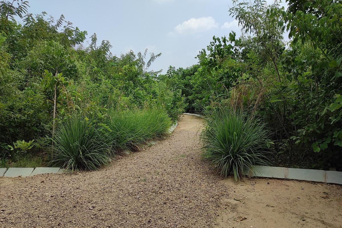 સંજય ટાંક, અમદાવાદ : 5 જૂને વિશ્વ પર્યાવરણ દિવસની ઉજવણી થવાની છે. પરંતુ અમદાવાદના લોકો માટે આ ઉજવણી ખાસ બની રહેવાની છે કારણ કે અમદાવાદ મ્યુનિસિપલ કોર્પોરેશન અમદાવાદમાં બનાવવા જઈ રહ્યું છે જંગલ. શહેરના ગોતા વિસ્તારમાં 40 હજાર વારથી પણ મોટા પ્લોટમાં કોર્પોરેશન દ્વારા 50 હજારથી વધુ ઝાડ વાવી જંગલ બનાવવા જઈ રહ્યું છે. જેનું કેન્દ્રીય ગૃહપ્રધાન અમિત શાહના હસ્તે પ્રારંભ કરાવાશે.