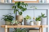 Lifestyle Tipsઆ પાંચ ઇન્ડોર પ્લાન્ટ તમારા ઘરની સુંદરતામાં લગાડી દેશે ચારચાંદ