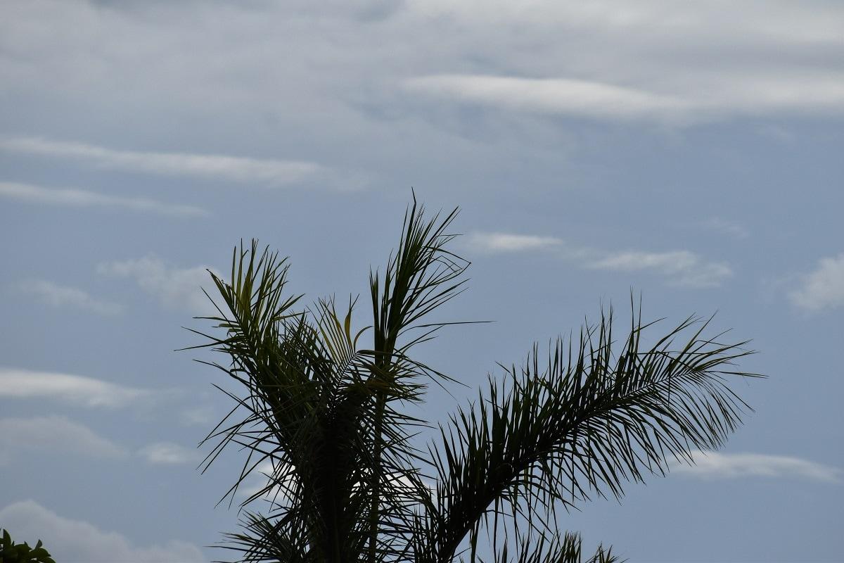 હવામાન વિભાગે કરેલી આગાહી પ્રમાણે, રાજ્યમાં હાલ દક્ષિણ,પશ્ચિમ દિશાનો પવન ફૂંકાઇ રહ્યો છે. આગામી 4 જૂન, શુક્રવારના રોજ દમણ, દાદરા નગર હવેલી, દાહોદ, આણંદ,ભાવનગર,અમરેલીમાં વરસાદ વરસી શકે છે. જ્યારે 5 જૂનના દમણ, દાદરા નગર હવેલી, બોટાદ, રાજકોટ, જુનાગઢ, અમરેલી, ભાવનગર, ગીર સોમનાથ, દીવમાં આ સાથે 6 જૂનના દમણ,દાદરા નગર હવેલી, અમદાવાદ, આણંદ, ખેડા, સુરેન્દ્રનગર, રાજકોટ, જુનાગઢ, અમરેલી, ભાવનગર, મોરબી, ગીર સોમનાથ, બોટાદ, કચ્છ, દીવમાં 30થી 40 કિલોમીટર પ્રતિ કલાકની ઝડપે પવન ફૂંકાવવાની સાથે હળવોથી મધ્યમ વરસાદ પડવાની શક્યતાઓ છે.