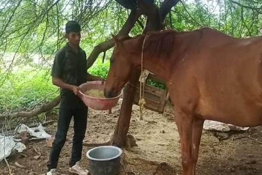 નવીન મેહર, ધાર. તમે સફેદ હાથી પાળવાની કહેવત તો સાંભળી હશે. પરંતુ મધ્ય પ્રદેશ (Madhya Pradesh)ના ધાર (Dhar)ના ધામનોદરમાં એક લાલ ઘોડો (Red Horse), સફેદ હાથી ઉપર પણ ભારે પડી રહ્યો છે. આ લાલ ઘોડો હોર્સ રાઇડિંગ ટીચર (Horse Riding Teacher)ના ગળે પડી ગયો છે. ટીચર સમજી નથી શકતો કે તે કરે તો કરે શું. આવો જાણીએ આ અજબ-ગજબ મામલો. ધામનોદના કુંદા ગામમાં રહેનારા અર્જુન કટારે ધામનોદના હિમાલય સ્કૂલમાં હોર્સ રાઇડિંગ ટીચર હતા. તેઓ કોન્ટ્રાક્ટર સચિન રાઠૌડની અંડરમાં બાળકોને ઘોડેસવારી શીખવાડતા હતા. પરંતુ કોરોના સંક્રમણે બધું વેરવિખેર કરી દીધું.
