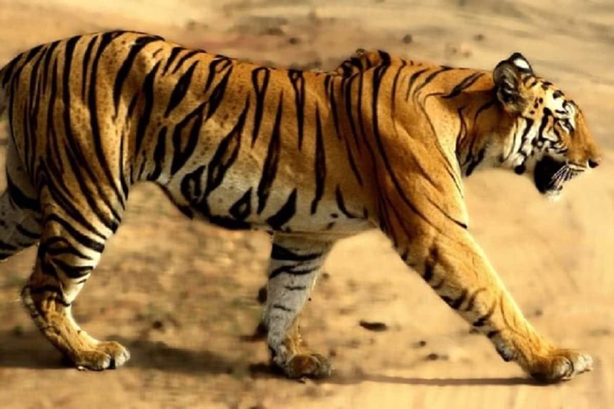 11 - 2016ના રિપોર્ટ અનુસાર દુનિયામાં માત્ર 3891 વાઘ(tiger) બચ્યા છે, જેમાંથી 70 ટકા ભારતમાં છે અને ભારતમાં પણ સૌથી વધારે 408 કર્ણાટકમાં છે.<br />12 - એટલા વાઘ જંગલમાં નથી, તેટલા તો લોકોએ પાળીને રાખ્યા છે.<br />13 - વાઘના સમૂહને Ambush અથવા Streak કહેવામાં આવે છે.<br />14 - એક વાઘ 18 hertz સુધીનો અવાજ પેદા કરી શકે છે અને તેની દહાડ 3 કિલોમીટર સુધી સાંભળી શકાય છે.<br />15 - નર વાઘ અને માદા સિંહના શારીરિક સંબંધથી પેદા થયેલા બચ્ચાને Tigong કહેવાય છે. અને નર સિંહ અને માદા વાઘના શારિરીક સંબંધથી પેદા થયેલા બચ્ચાને Ligers કહેવામાં આવે છે.