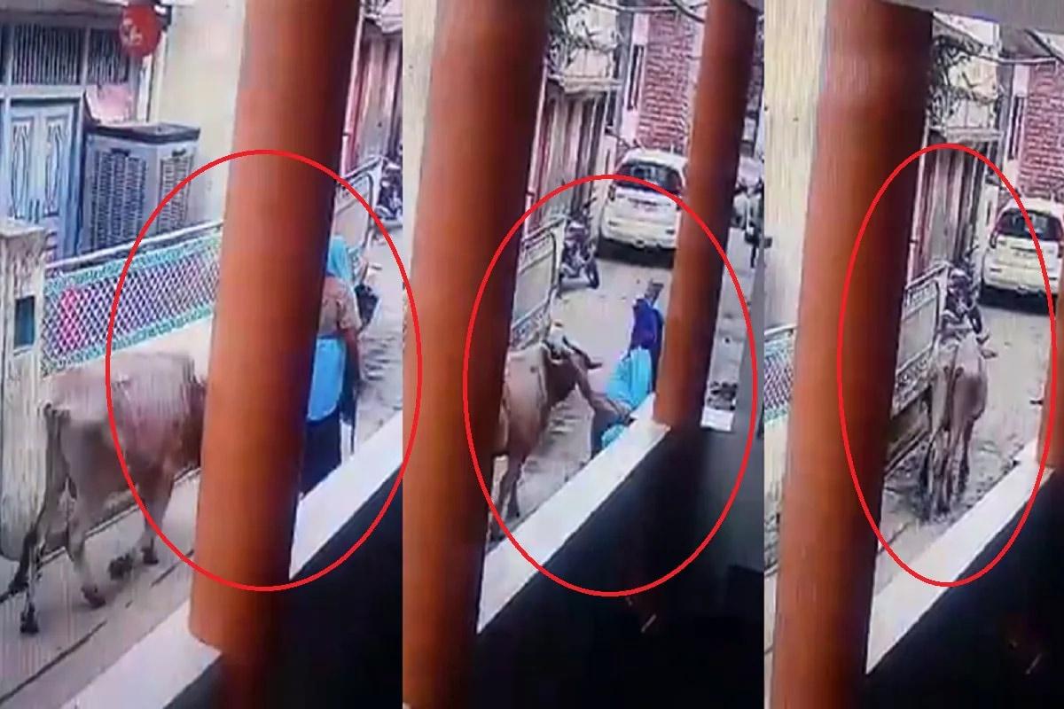 OMG: વૃદ્ધ મહિલાને આખલાએ શિંગડાથી ઉછાળીને પટકી, CCTVમાં કેદ થઈ ઘટના