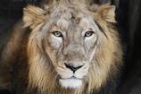 World Lion Day: ગુજરાતનાં આ વિસ્તારમાં છે 'સિંહનું સ્મારક', લોકો માને છે અહીં માનતા
