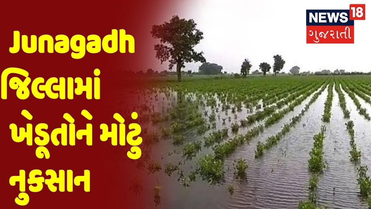 Junagadh જિલ્લામાં ખેડૂતોને મોટું નુકસાન