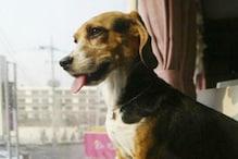 عدالت نے کتے کو سنائی سزائے موت ، پھر کیا بری